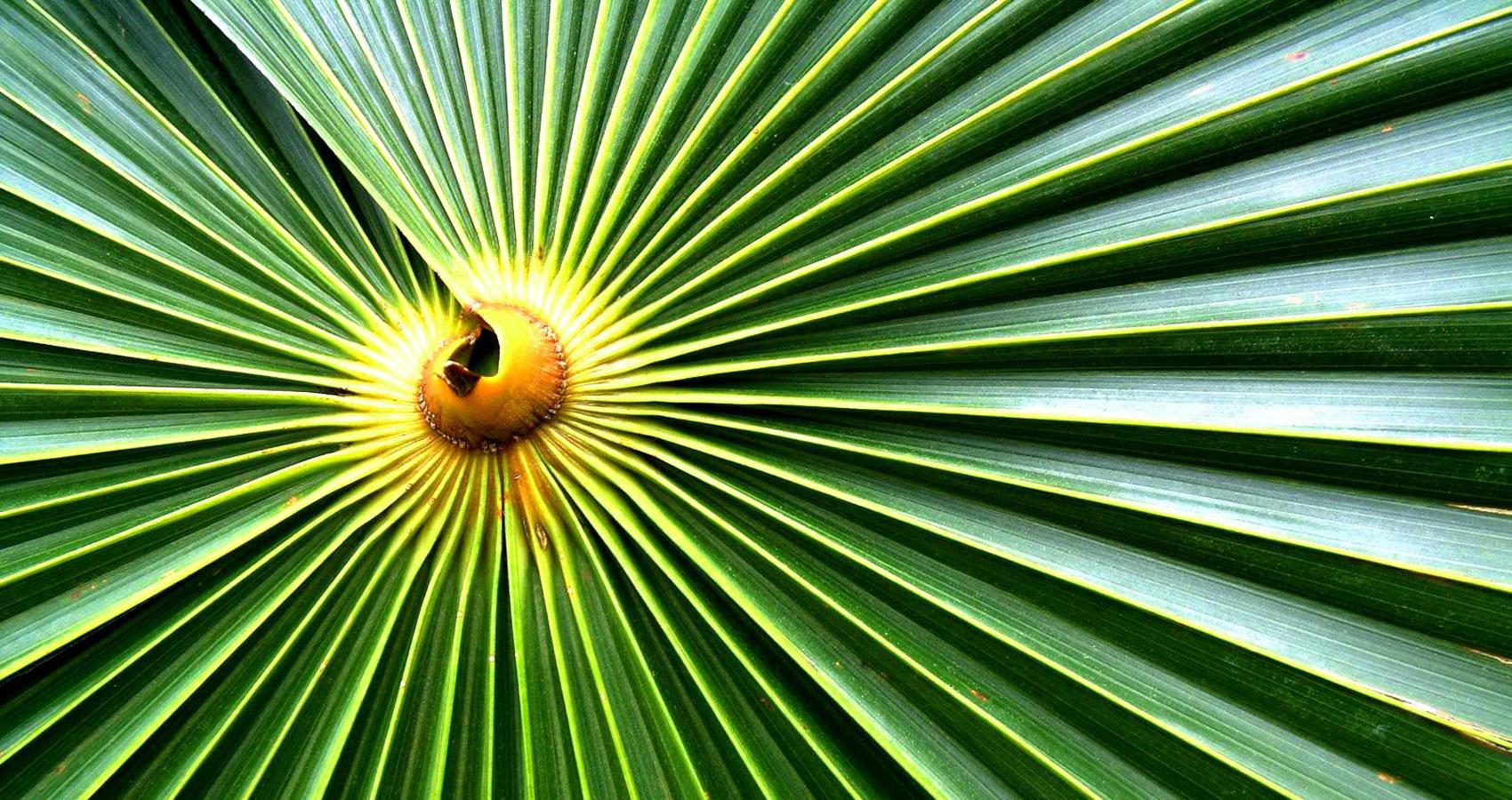 Palm Sunday at Spillwords.com