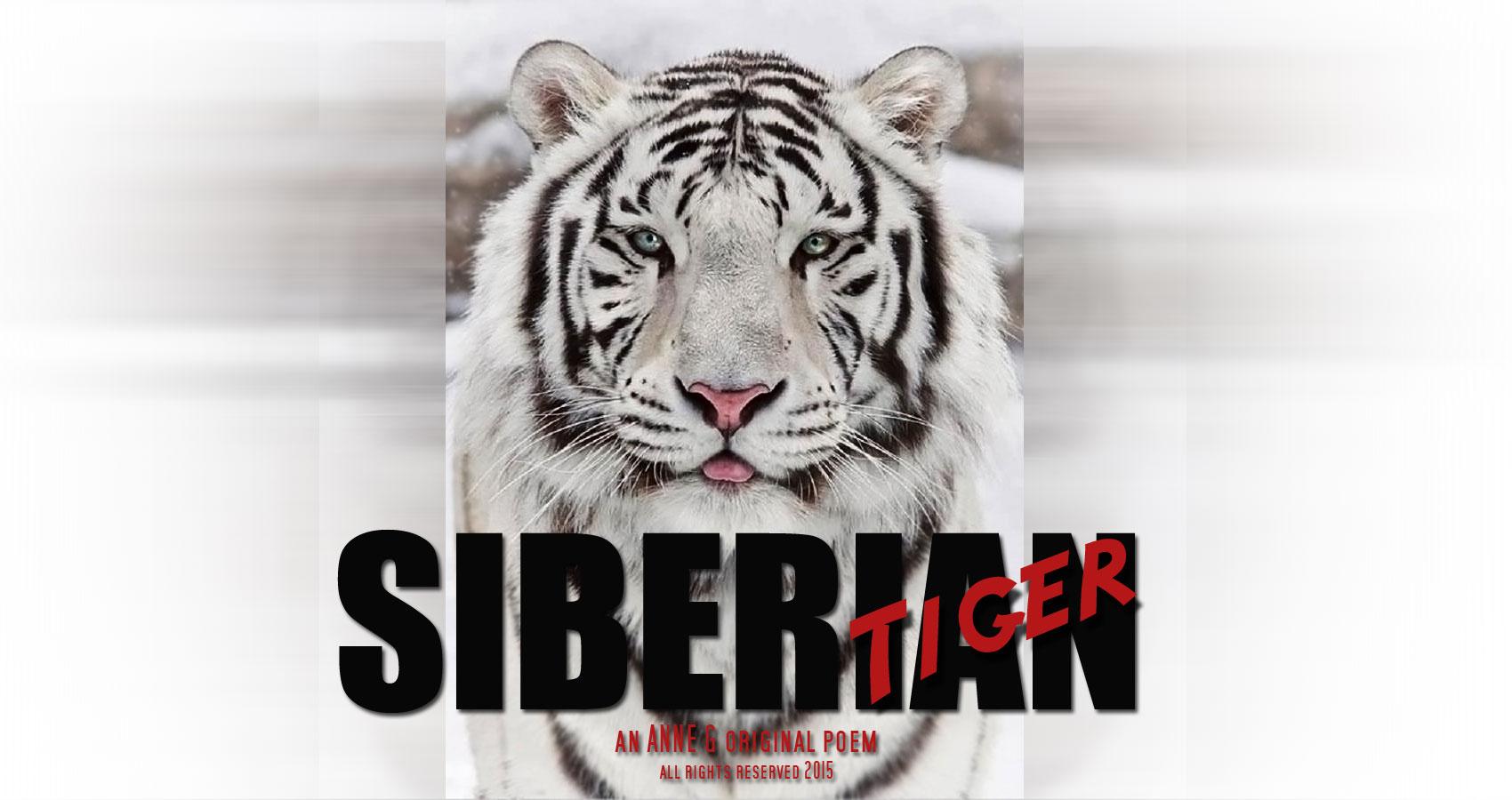 Siberian Tiger an Anne G Original Poem at spillwords.com