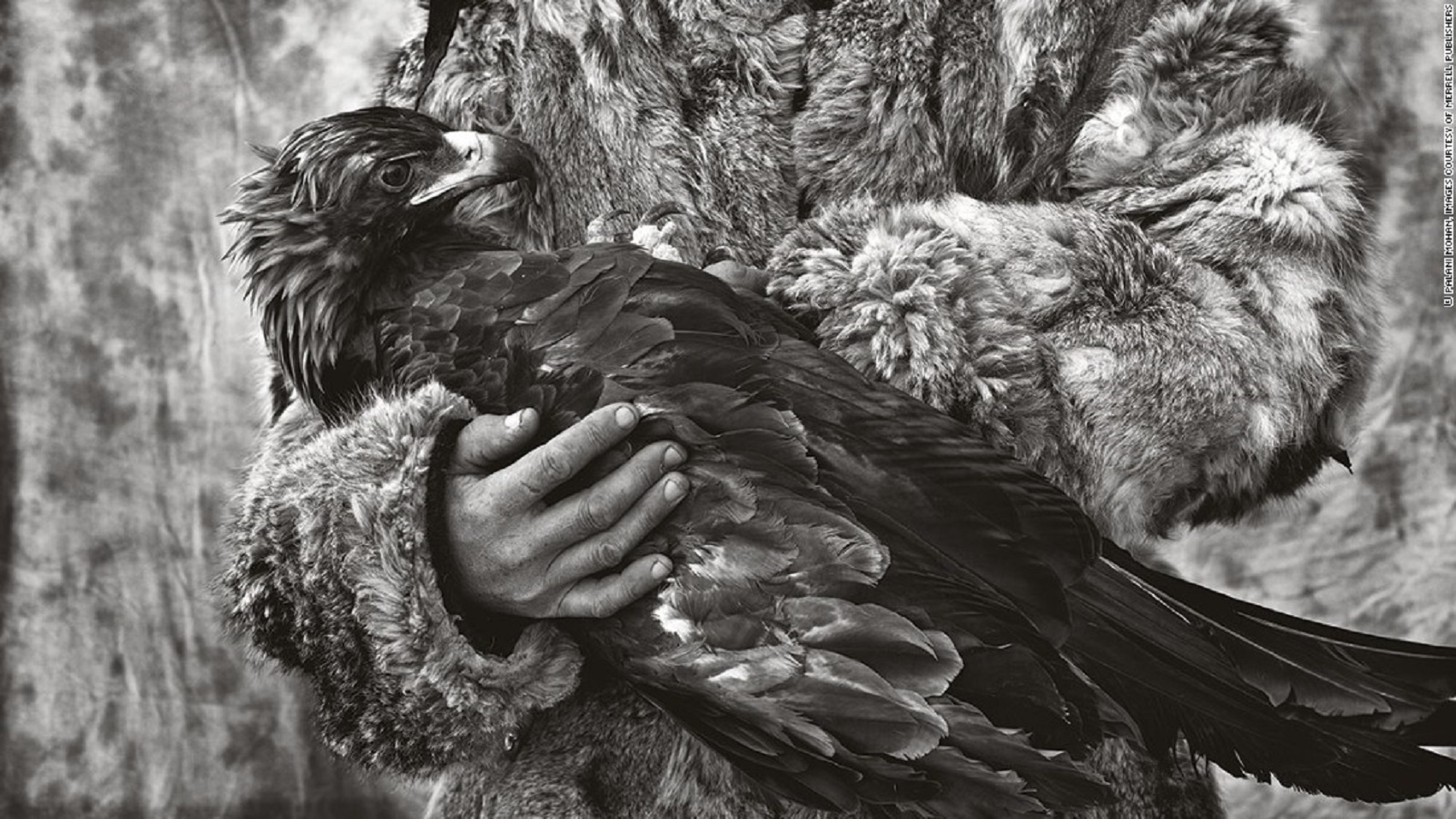 The Last Mongolian Eagle Hunters at spillwords.com