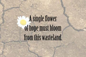 A Single Flower at Spillwords.com