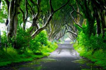 Go Green at Spillwords.com