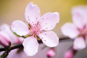 Spring at Spillwords.com