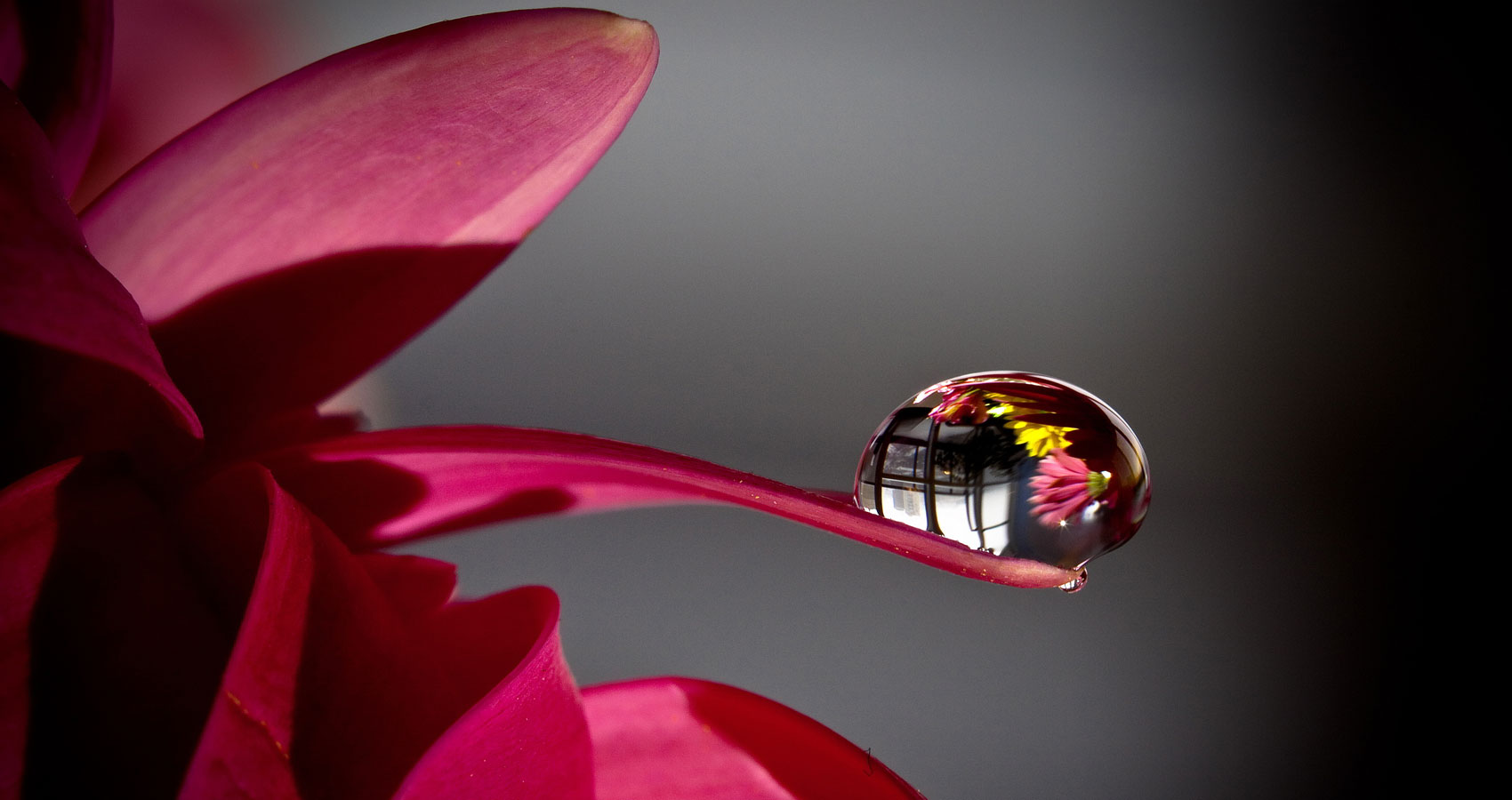 De Flower at Spillwords.com