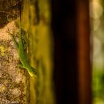 Photographers Journal - El Yunque Rain Forest, PR at Spillwords.com