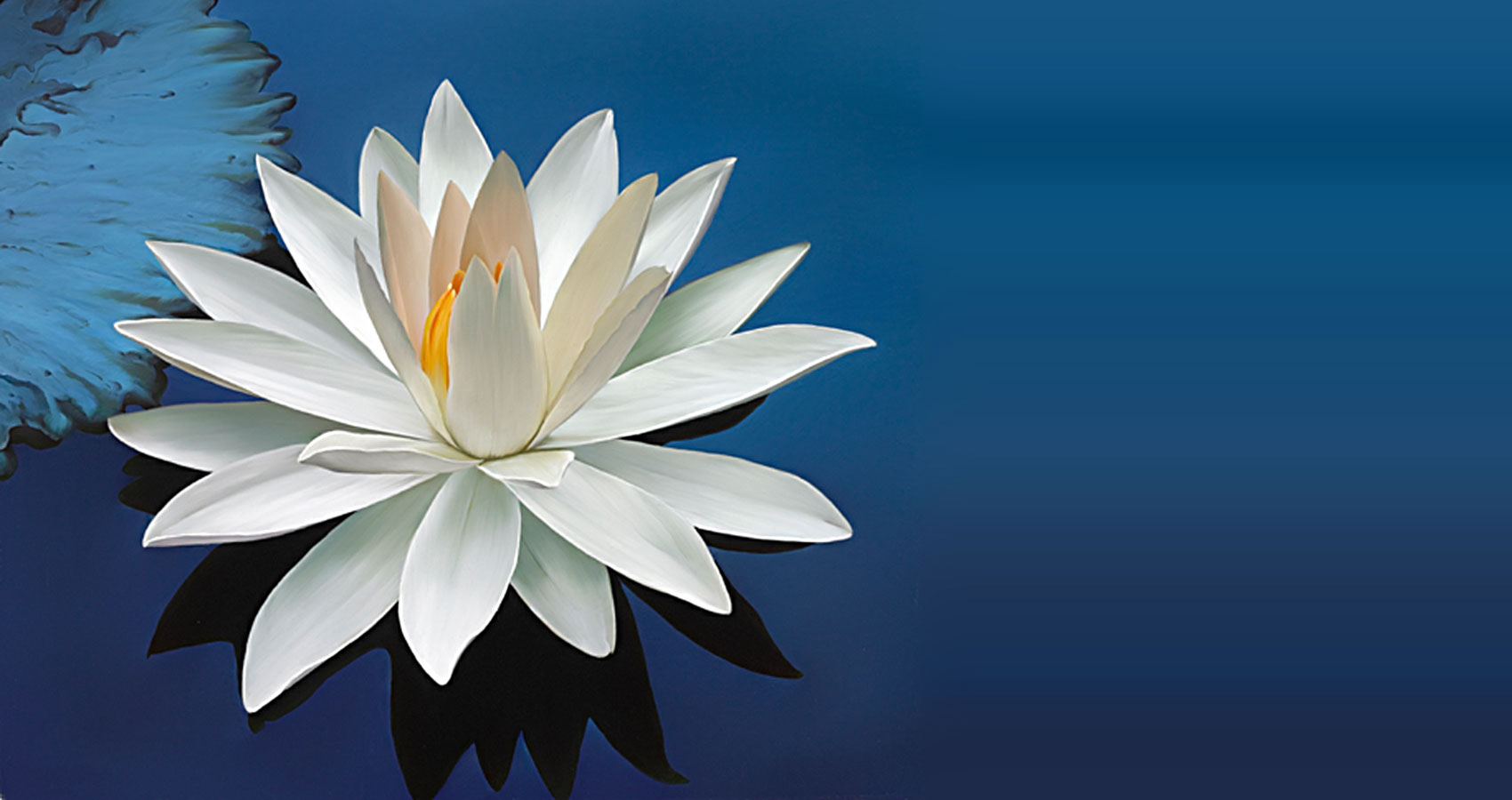 The Lotus-Flower at Spillwords.com