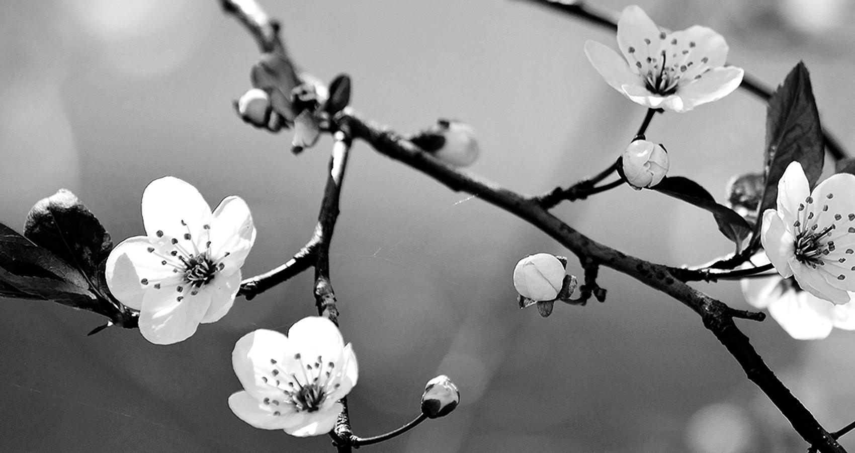 Blossom Day by Sarra7*( (Dr.StrangeLove) at Spillwords.com