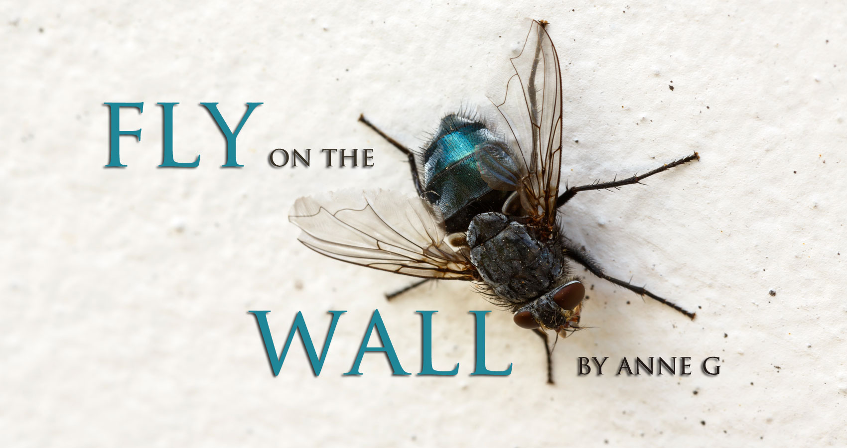 Fly on the Wall by Anne G at Spillwords.com