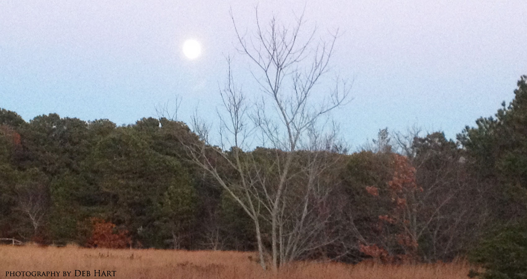 Moon Meadow, Martha's Vineyard by Anda Peterson at Spillwords.com