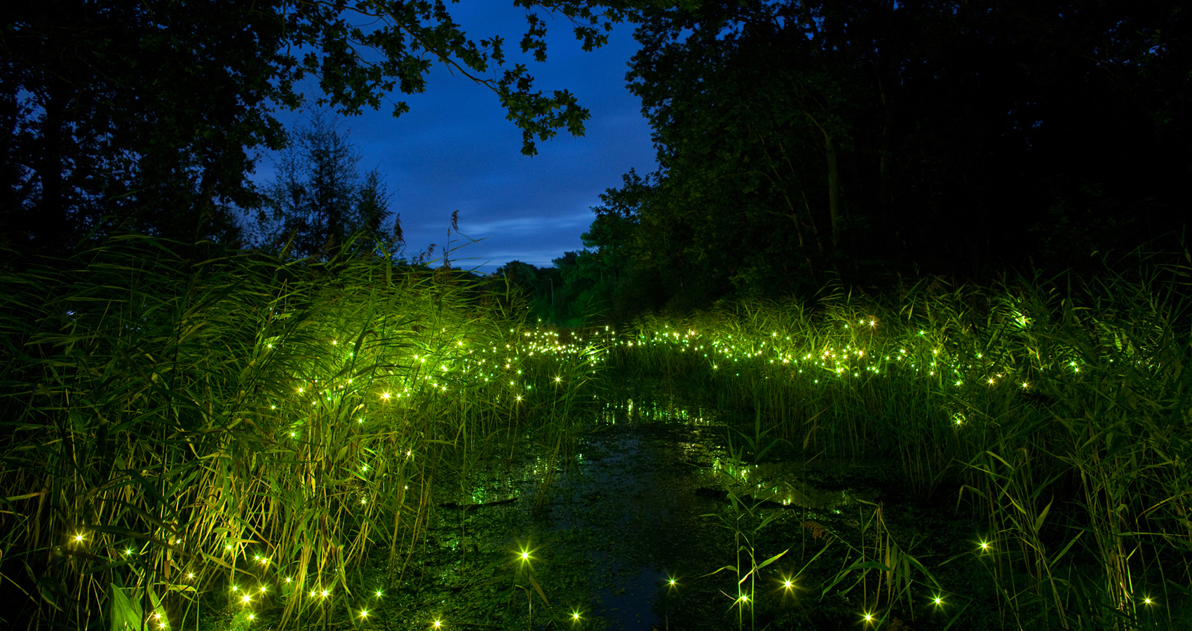 Fireflies written by Alan Mitnick at Spillwords.com