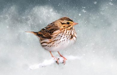 January's Sparrow by Bob Jensen at Spillwords.com