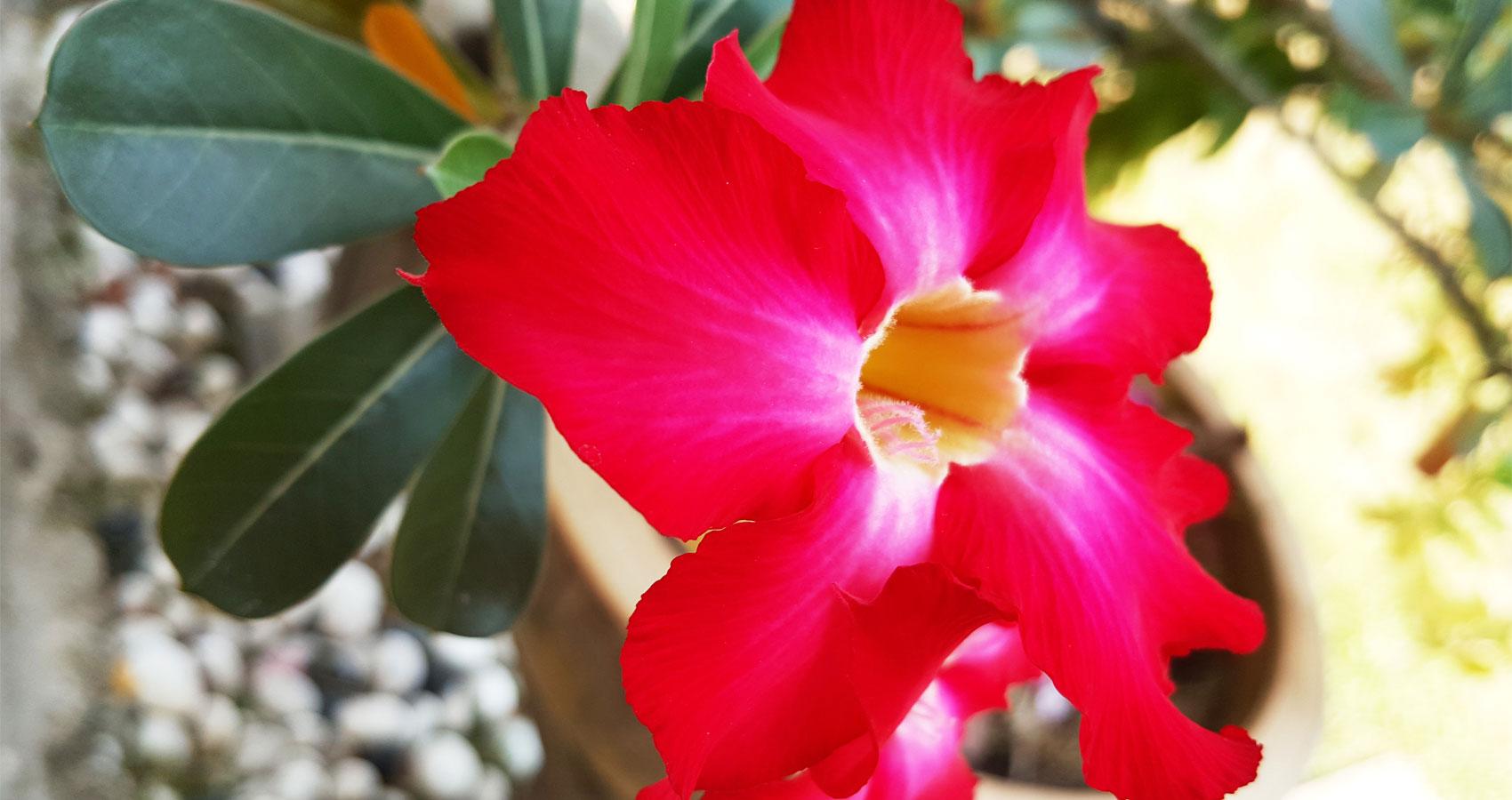 Prosperity Flower Haiku by Jfaydreams at Spillwords.com