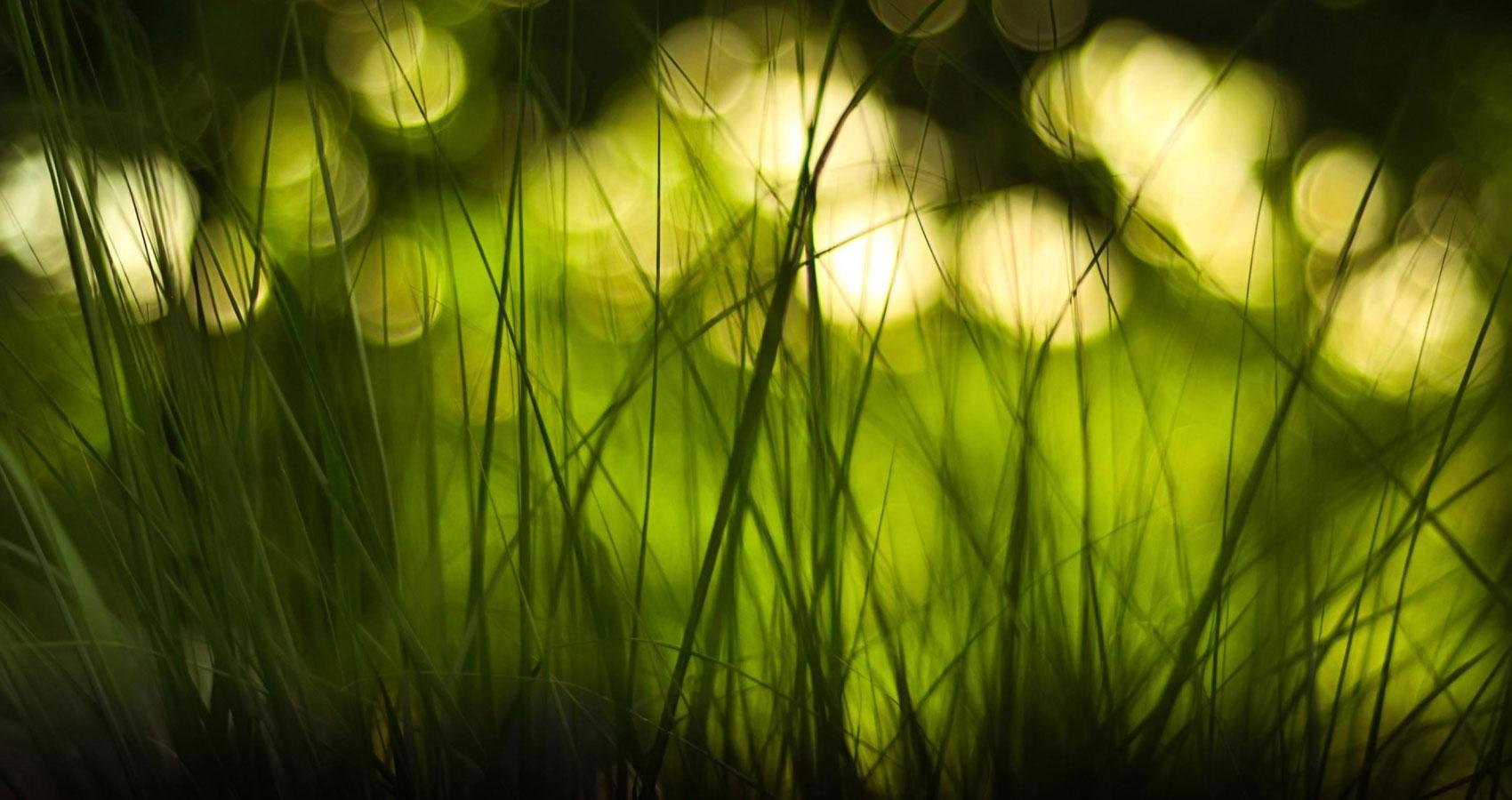 Spire Grass Ripples by Freya Pickard at Spillwords.com
