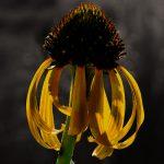 Flower 'X' by Seorin Kae at Spillwords.com