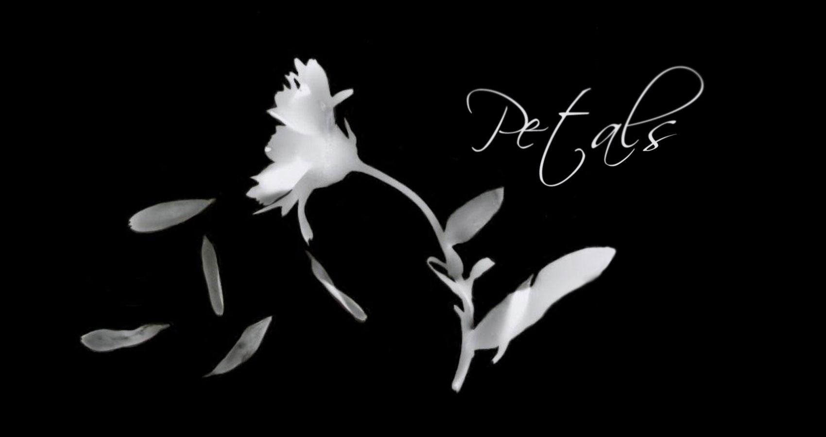 Petals, written by Steven Anton Butler at Spillwords.com