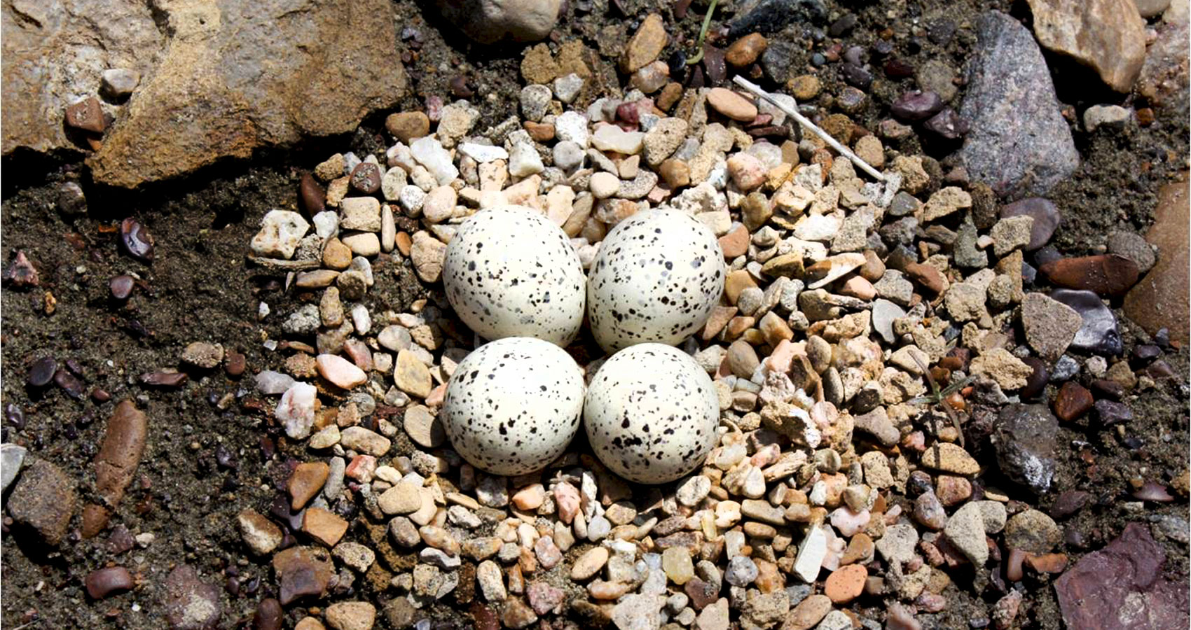 The Plover's Nest, by Bob Jensen at Spillwords.com