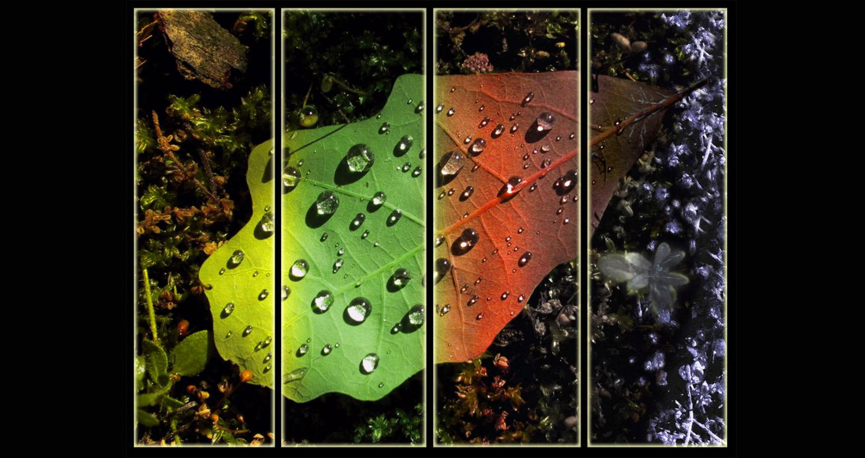 A Life In The Leaf written by Geovanni Villafañe at Spillwords.com