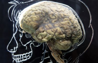 Brain Region Associated with Generosity by Tia Ghose at Spillwords.com