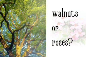 Walnuts or Roses? by Hemmingplay at Spillwords.com