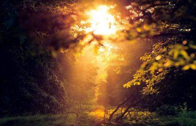 Woods! by Shruthi Shankel at Spillwords.com