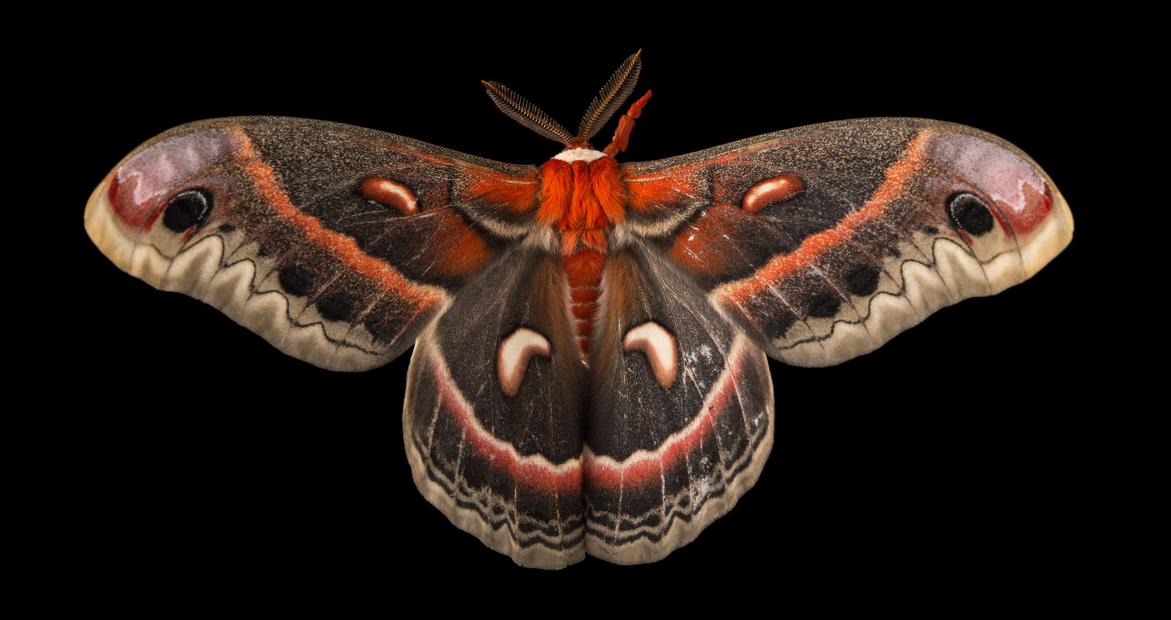 A Moth written by S. Thomas Summers at Spillwords.com