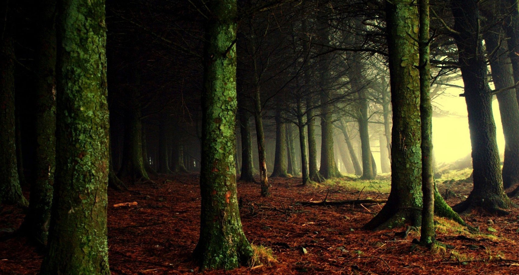 Hiding in the Woods written by Nidhi Gupta at Spillwords.com