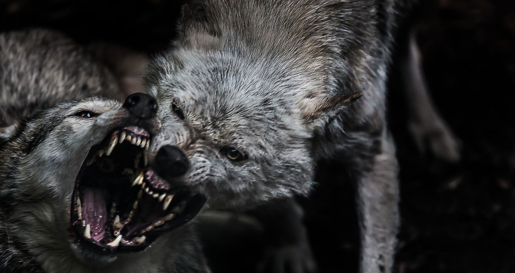 Wolves: Part Two written by Lucinda S. Horel at Spillwords.com