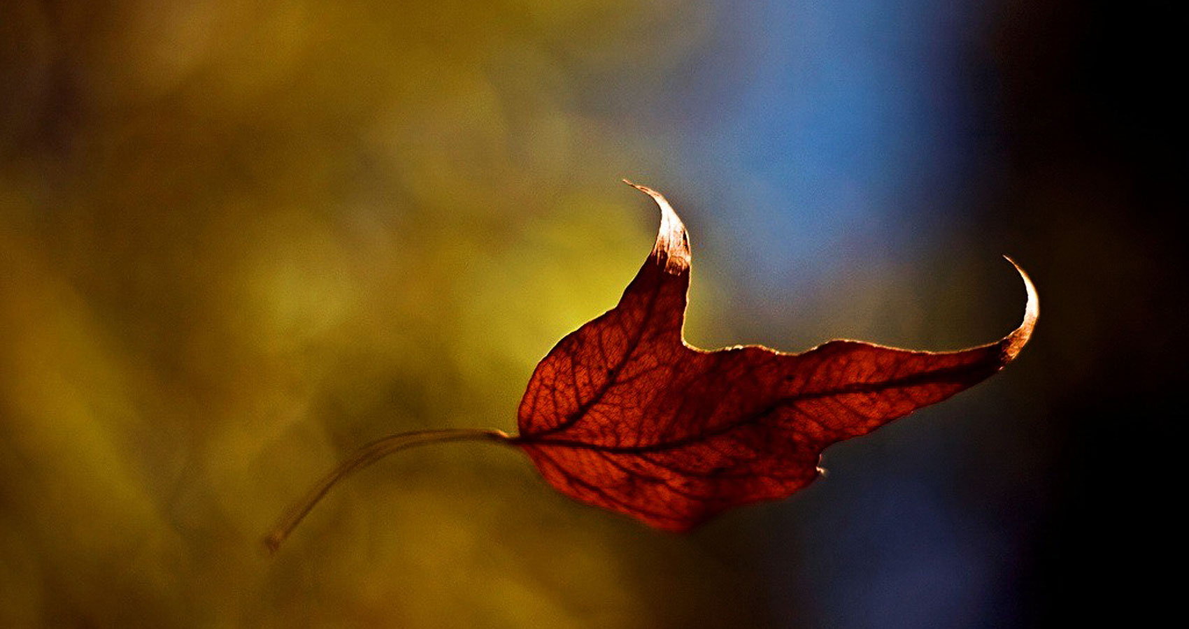 The Last Leaf Falls written by Nicole Cheng at Spillwords.com
