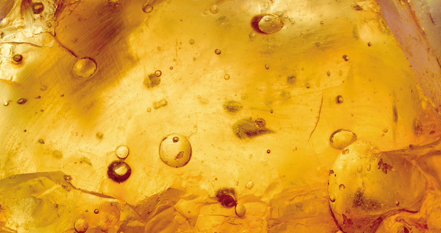 Amber Fossil written by Nicole Cheng at Spillwords.com