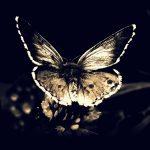 Mariposa Alas De Dragón