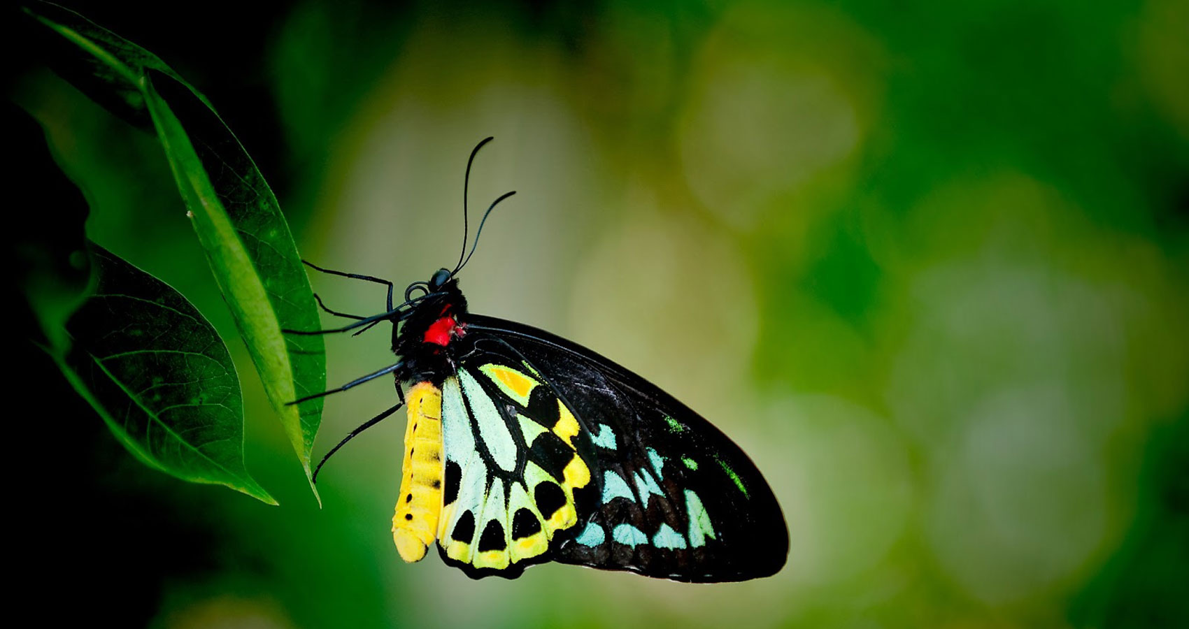 Native Butterflies by Jessica Helen Brant at Spillwords.com