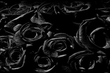 Black Roses written by Peter Owen at Spillwords.com