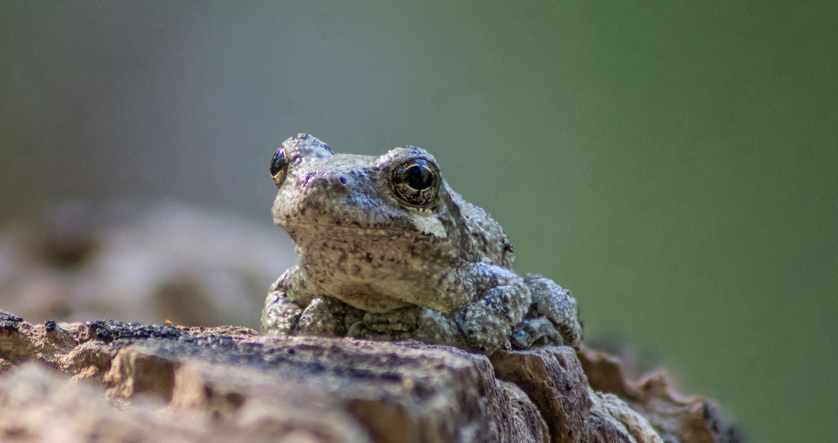 Gray Frog written by John R. Cobb at Spillwords.com