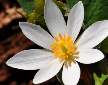 The wildflower written by Leanne Yeoman at Spillwords.com