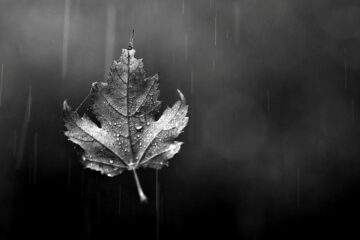 A Leaf Falls written by Pilgrim at Spillwords.com
