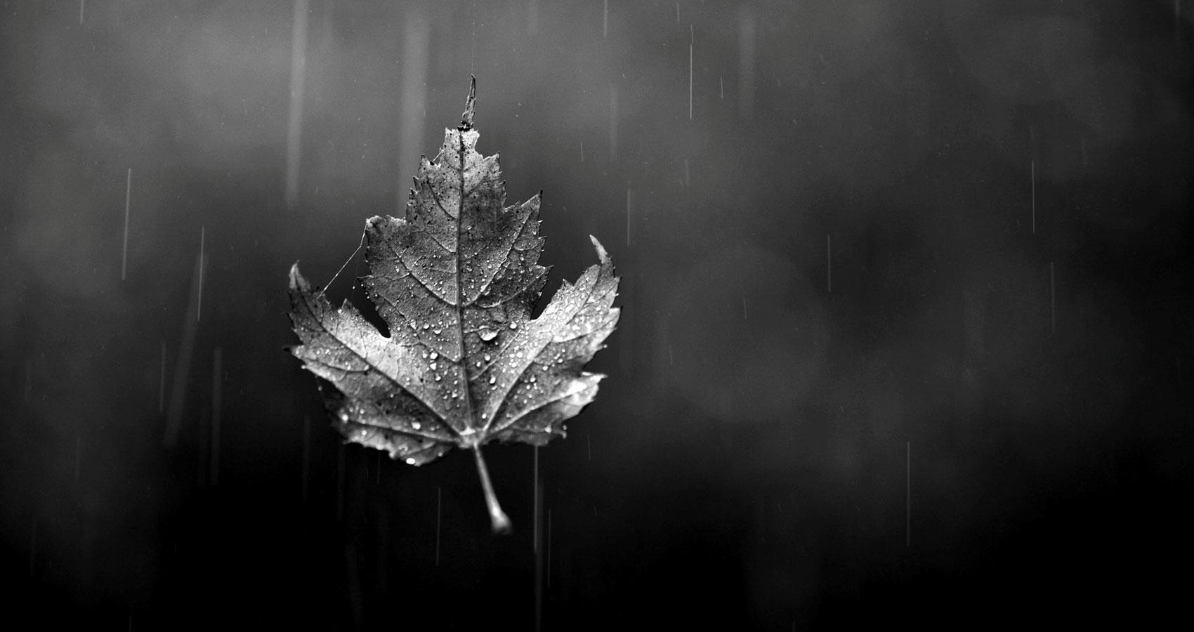 A Leaf Falls written by Pilgrim at Spillwords.com
