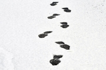 A Walk In The Snow written by Gina at Spillwords.com