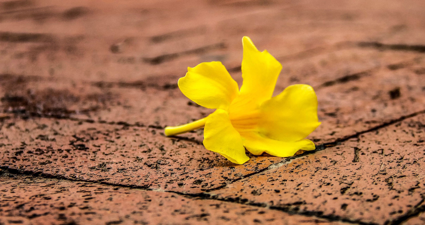 All the Daffs are Dead by J.Ahlberg at Spillwords.com