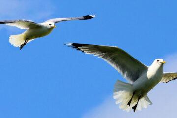 BIRDS! written by Anahit Arustamyan at Spillwords.com