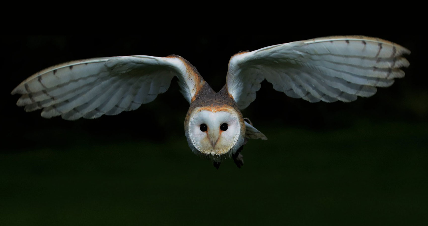 I'd Like To Tell You About The Time I Heard The Owl Call written by Catherine MacMillan Sihoe at Spillwords.com