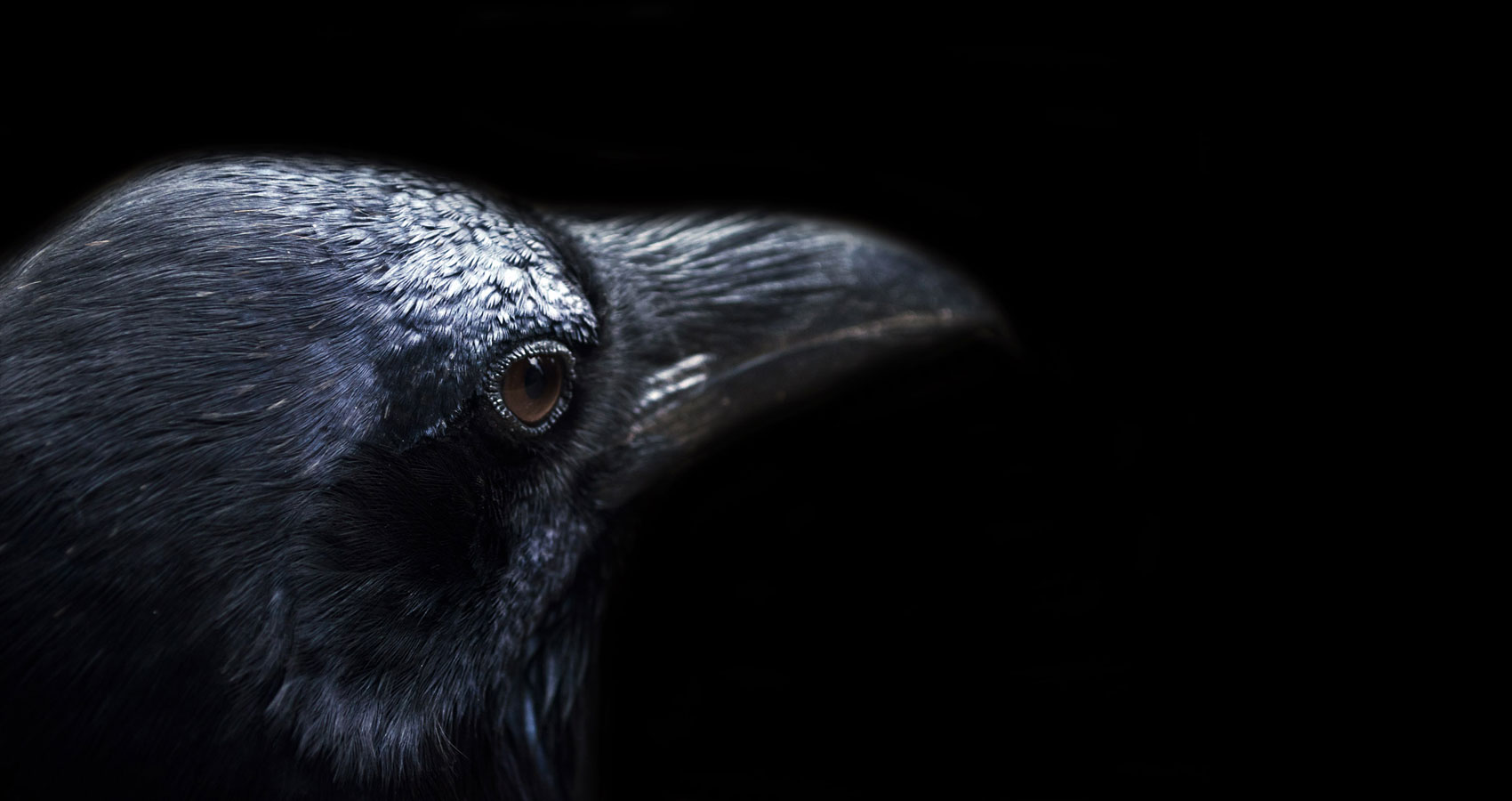 The Crow's Lament written by TM Arko at Spillwords.com