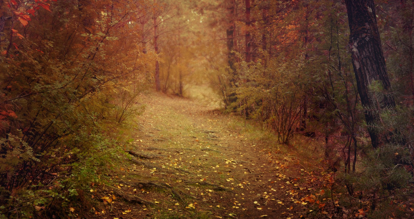 An Evening Walk in Autumn by hedgehog at Spillwords.com