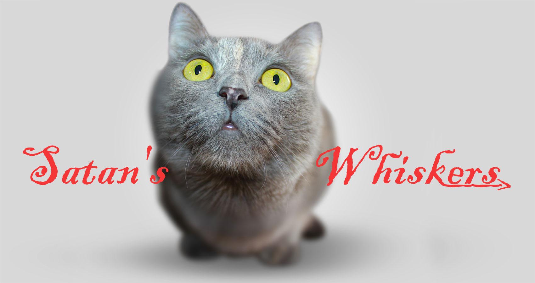 Satan's Whiskers written by Lorenzo Berardiat Spillwords.com