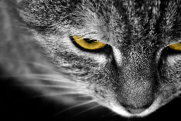 CATS written by Stanley Wilkin at Spillwords.com