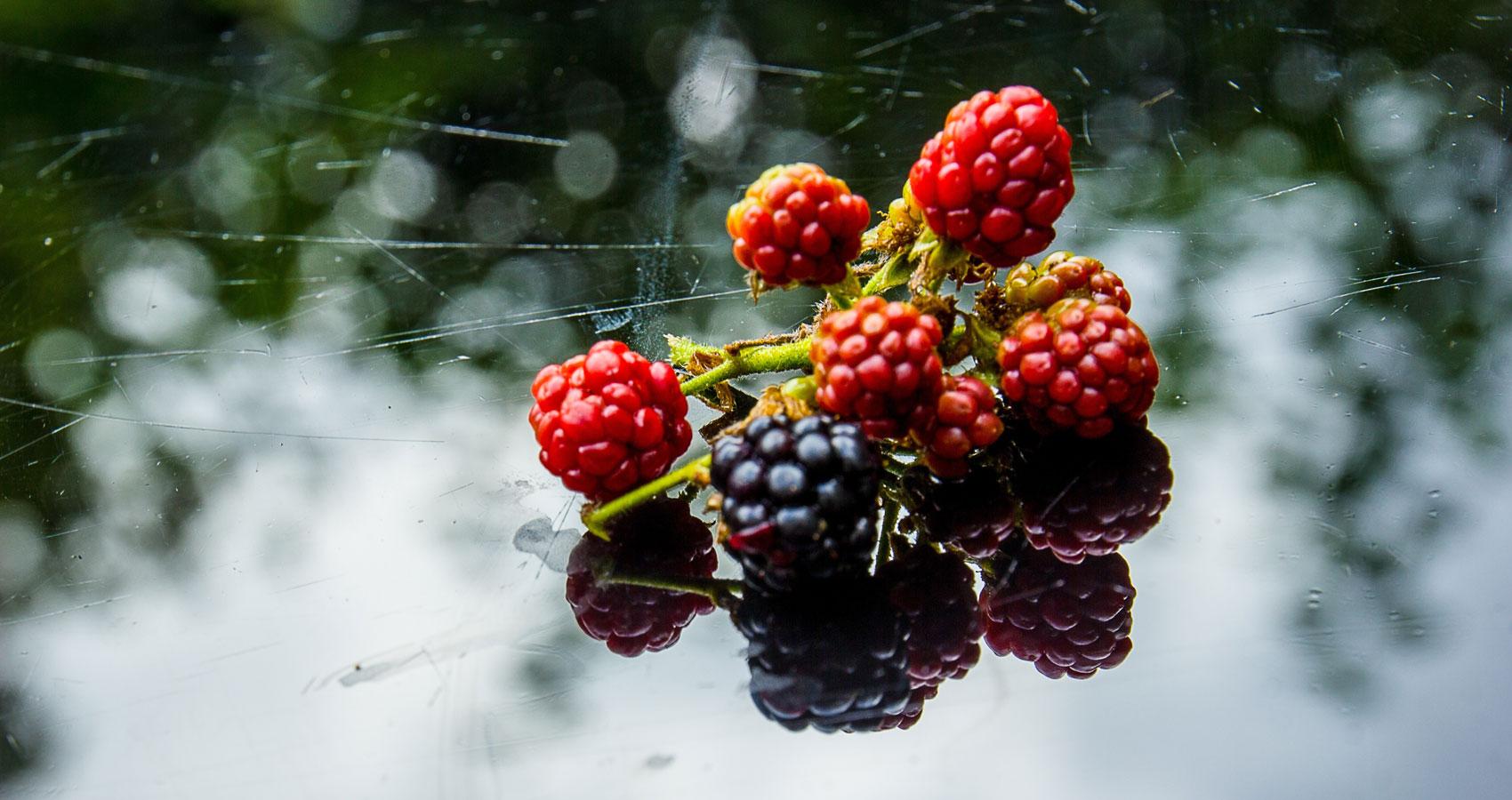 Blackberry-Picking by Seamus Heaneyat Spillwords.com