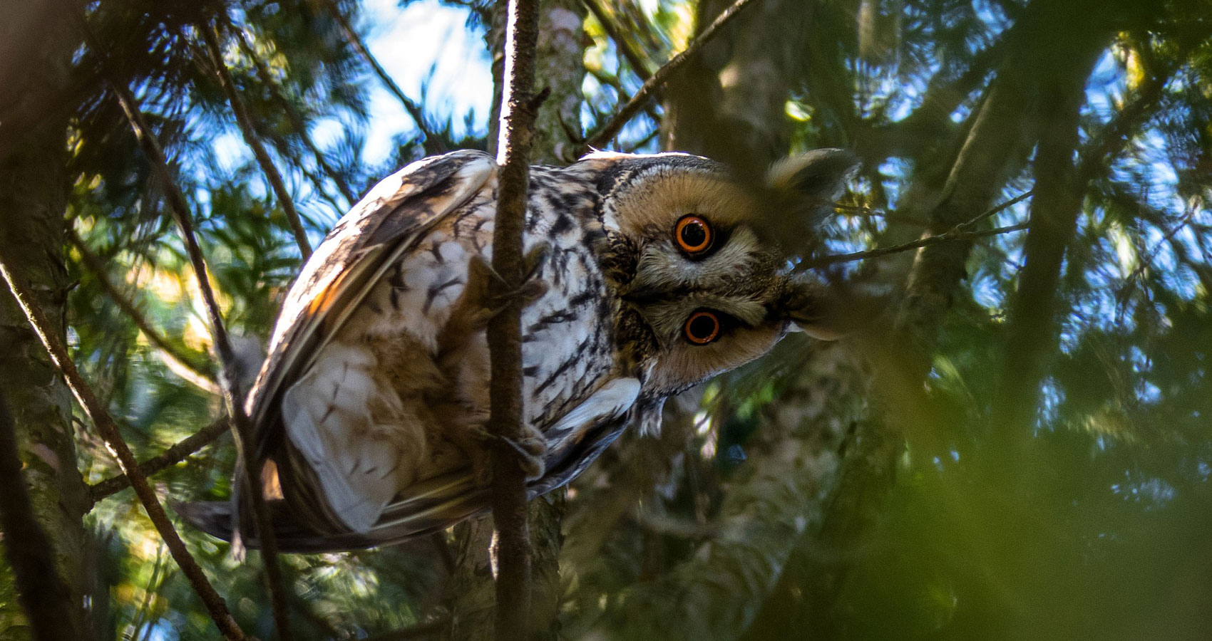 I Just Shot An Owl by Joseph Kachiliko at Spillwords.com