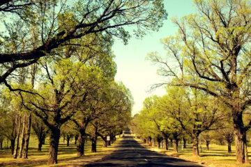 ROSEMARY LANE, written by Leanne Howard Kenney at Spillwords.com