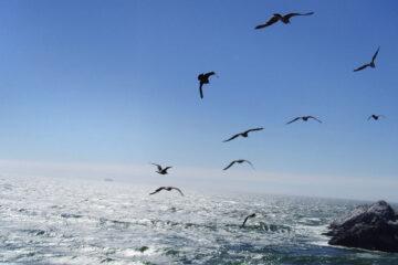 Seagulls written by Daniel S. Liuzzi at Spillwords.com