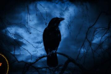 A Poerrific Night! by Geovanni Villafañe at Spillwords.com
