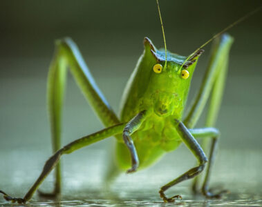 Crickets And Her written by Danielle Chua at Spillwords.com