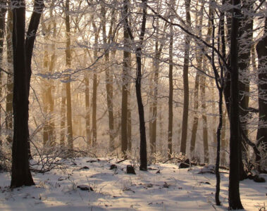 A Winter Tale written by LadyLily at Spillwords.com